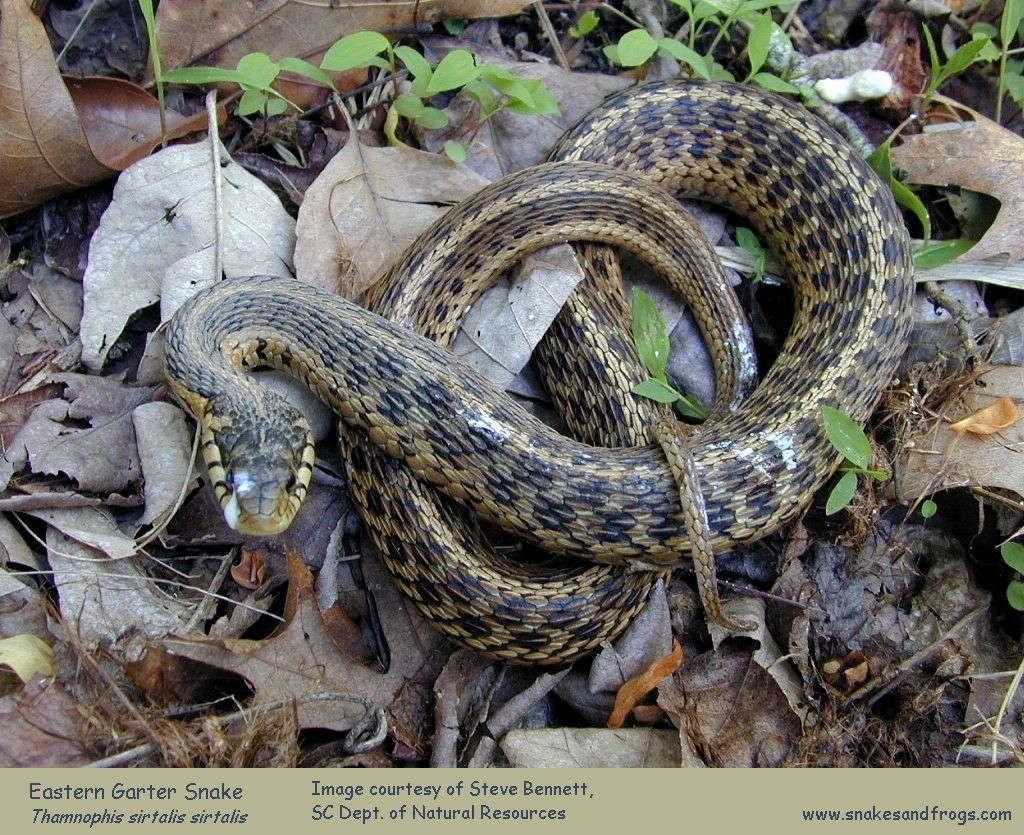 how to take care of a garter snake